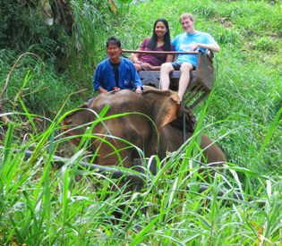 Elephant ride through the forest